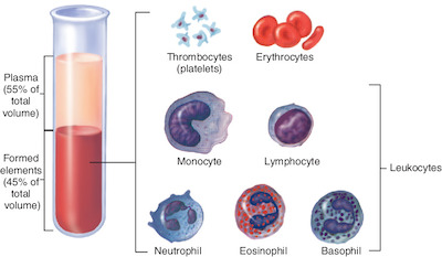 What are the cellular components of blood?