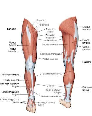 Leg Tabers Medical Dictionary